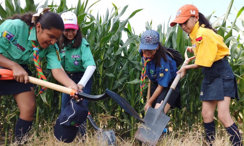 Arranca Erandi Bermúdez campaña de reforestación que dará 10 mil nuevos pulmones a Guanajuato